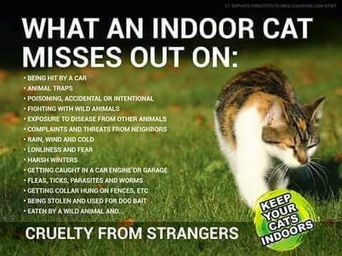 Guide to things an indoor cat misses out on